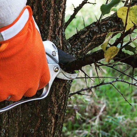 Tree Removal & Maintenance