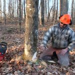 TREE SERVICE BRISBANE