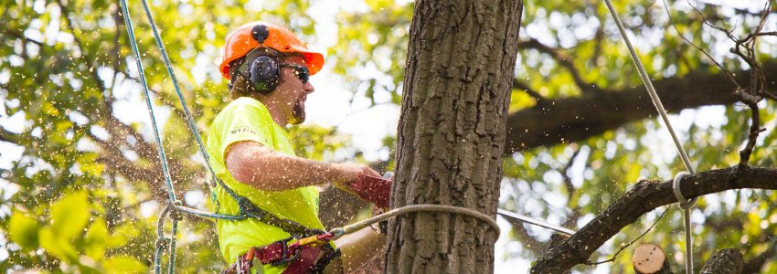 TREE PRUNING BRISBANE