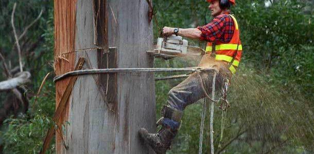TREE TRIMMING BRISBANE