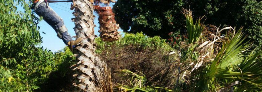 Palm Tree Removal Brisbane